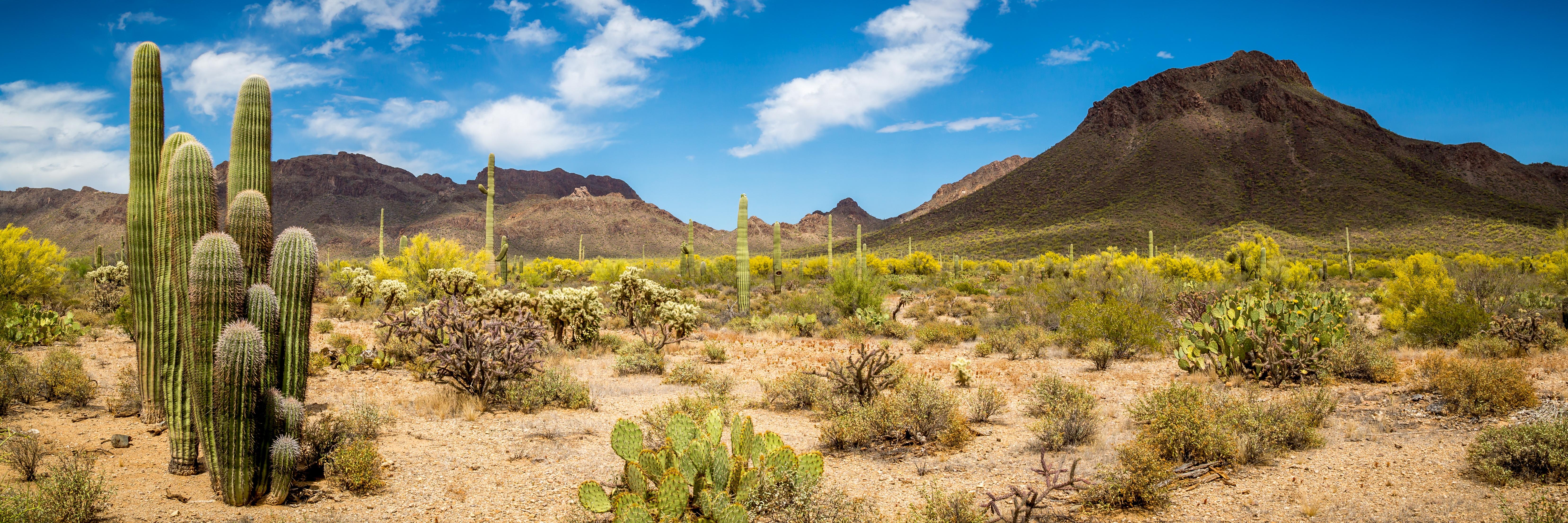 Arizona-Desert-Loves-You've-Got-Maids.jpg