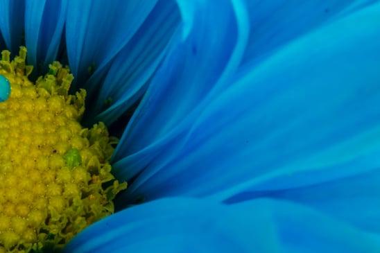 Canva - Blue flower